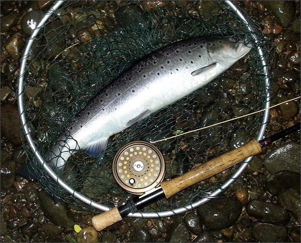 Abernethy Angling Association sea trout