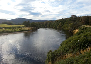 Fishing the Spey at Aviemore, the Alder Bend