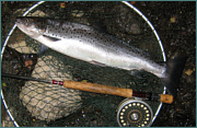 Sea Trout at night